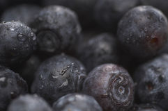 Wet Blueberries Royalty Free Stock Images