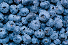 Wet blueberries background. Blueberries background with small water drops royalty free stock image