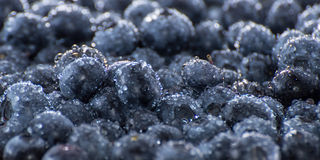 Wet Blueberries Background Stock Photography