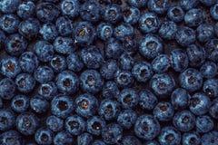 Wet blueberries on black slate Royalty Free Stock Photos