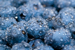 Wet blueberries close up. Blueberries with small water drops close up stock images