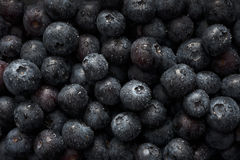 Wet Blueberries Close Up Royalty Free Stock Photography