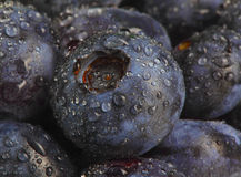 Wet blueberry datail Stock Photo