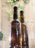 Wet bottles of Beer Stock Photography