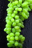 Wet branch of green grape berries. Top view black background royalty free stock image
