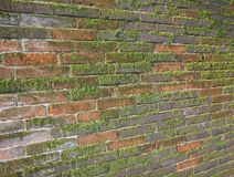 Wet brick wall exposed to the North with a lot of green moss Royalty Free Stock Image