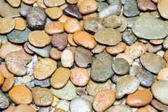Wet brown pebbles stone texture on the ground in bathroom. Stock Images