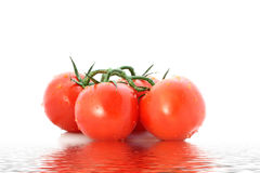Wet bunch of tomatoes in water with reflection Royalty Free Stock Images