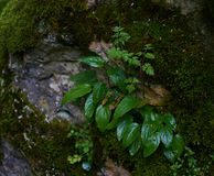Wet bush in forest Stock Photography
