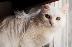Wet cat Stock Photography