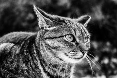 Wet Cat. Fisherman's Cat all wet from the sea Black and white Royalty Free Stock Photography