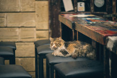 Wet cat in the rain on a chair near the bar counters. On Cyprus royalty free stock photos