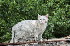 Wet cat on the street. Stock Images