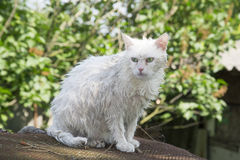 Wet cat on the street. Royalty Free Stock Photo