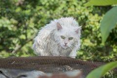 Wet cat on the street. Stock Photos