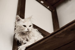 Wet cat Royalty Free Stock Photos