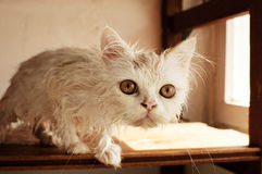 Wet cat Stock Photo