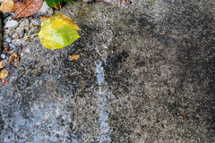 Wet cement floor Stock Photos