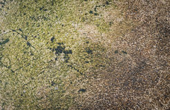 Wet Cement wall cover with moss texture Stock Images