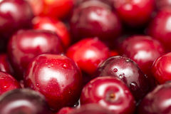 Wet Cherries. Focus On Two Cherries From A Larger Crowd royalty free stock photography