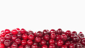 Wet cherries Stock Image