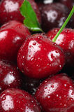 Wet cherries close-up Stock Photography