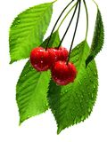 Wet cherries on white Royalty Free Stock Photo