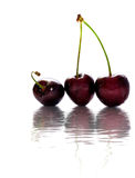 Wet Cherry Dreams background Royalty Free Stock Photo
