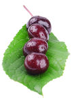 Wet cherry on a green leaf Stock Photos
