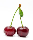 Wet cherry  on a white Royalty Free Stock Image