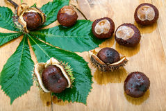 Wet Chestnuts Royalty Free Stock Photography