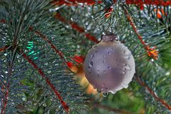 Wet Christmas. Christmas tree covered with drops of water suggesting rainy warm weather Royalty Free Stock Photography