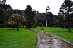 Wet city park in the rainy day with big trees Stock Image