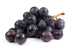 Wet cluster of blue grapes Stock Images