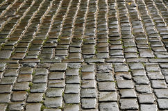 Wet cobbles of block pavement Royalty Free Stock Image