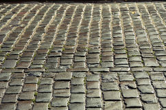 Wet cobbles of block pavement Stock Photos