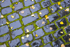 Wet Cobblestone Royalty Free Stock Image