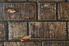Wet cobblestones and fallen leavesA scene of cobblestone and fallen leaves wet with rain Stock Photo