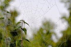 Wet cobweb Stock Photo