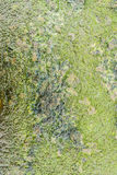 Wet concrete with lichen Royalty Free Stock Photo