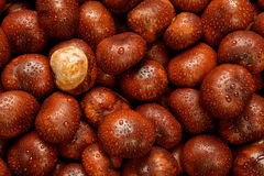 Wet Conkers Royalty Free Stock Photography