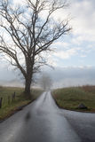 Wet Country Road Royalty Free Stock Image