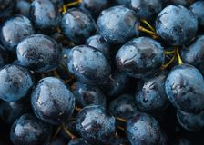 Wet dark fall grape or mountain grapes pattern Stock Image