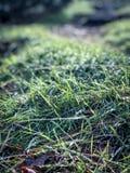 Grassy knoll royalty free stock photo