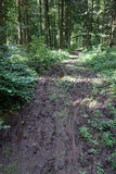 Wet dirt road Royalty Free Stock Photography
