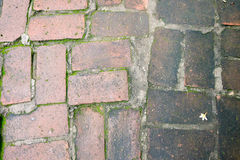 Wet and dirty slippery bricks floor Royalty Free Stock Image