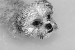 Wet Dog Stock Images