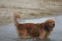 Wet dog on the beach Stock Photo
