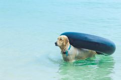The wet dog at the beach. Stock Images