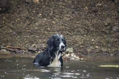 Wet dog Stock Photography